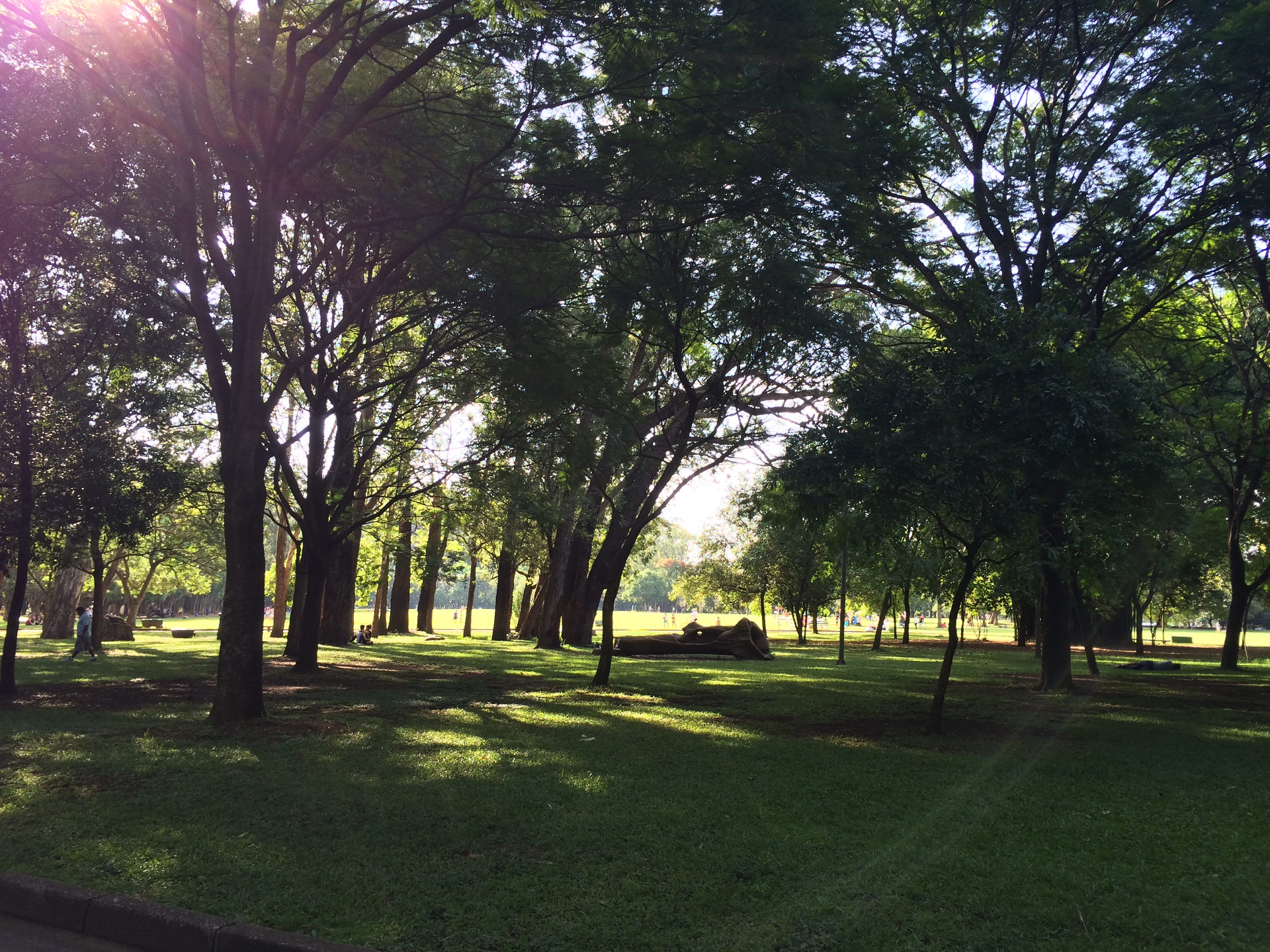 An afternoon in Ibirapuera Park - By @santanavagner